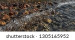 rocky seabed with a rolling... | Shutterstock . vector #1305165952