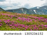 spring in mountains with... | Shutterstock . vector #1305236152
