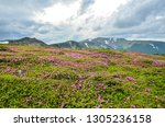 spring in mountains with... | Shutterstock . vector #1305236158