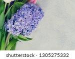 hyacinth fresh flowers   Shutterstock . vector #1305275332