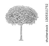 digital drawing of broadleaved... | Shutterstock . vector #1305311752