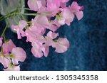 sweet pea flower | Shutterstock . vector #1305345358