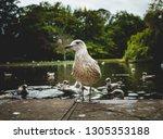 simple white spotty seagull on... | Shutterstock . vector #1305353188