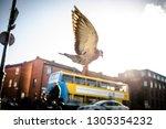 from below of pigeon in moment... | Shutterstock . vector #1305354232