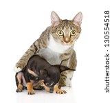Stock photo the cat hugs a dog isolated on white background 130554518