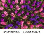 floral spring background or...   Shutterstock . vector #1305550075
