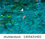 a transparent and beautiful... | Shutterstock . vector #1305631402