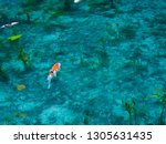 a transparent and beautiful... | Shutterstock . vector #1305631435