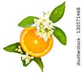 Citrus Fruit   Orange   Cut Off ...
