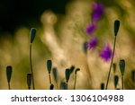 poppy seed boxes on background... | Shutterstock . vector #1306104988