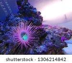 sea anemone  tube anemone  copy ... | Shutterstock . vector #1306214842