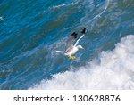 seagull | Shutterstock . vector #130628876