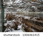 abandoned and neglected...   Shutterstock . vector #1306461415