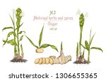 set colorful hand drawn of...   Shutterstock .eps vector #1306655365