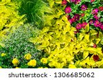 wide picture spring flowers in... | Shutterstock . vector #1306685062