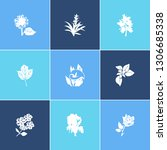 flora icon set and guzmania... | Shutterstock .eps vector #1306685338