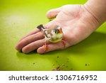 bird zebra finch on hand near... | Shutterstock . vector #1306716952