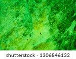 concrete wall  texture green... | Shutterstock . vector #1306846132