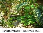 Tropical Plants Along A Garden...