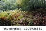 spring forest summer day nature ... | Shutterstock . vector #1306936552