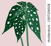 begonia maculata wightii. hand... | Shutterstock .eps vector #1307106028