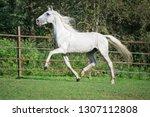 running white beautiful  orlov ...   Shutterstock . vector #1307112808