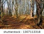 beautiful deciduous trees in... | Shutterstock . vector #1307113318