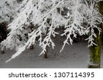 the trees in snow nearby the... | Shutterstock . vector #1307114395