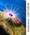 sea anemone  tube anemone  copy ... | Shutterstock . vector #1307118538