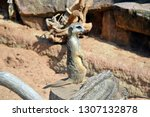 suricata suricatta watchful... | Shutterstock . vector #1307132878
