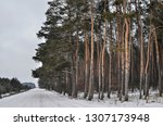 road near the forest in winter | Shutterstock . vector #1307173948