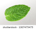 fresh mint leaf. vector... | Shutterstock .eps vector #1307475475