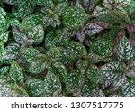textures surface pattern design ... | Shutterstock . vector #1307517775