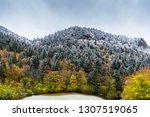 germany  enchanted coniferous... | Shutterstock . vector #1307519065