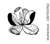 hand drawn ink botanical...   Shutterstock .eps vector #1307531962
