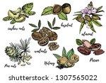 almonds  pecan  cashew nuts ... | Shutterstock .eps vector #1307565022