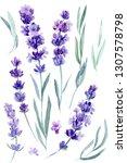 set of lavender flowers ...   Shutterstock . vector #1307578798