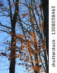 black winter tree limbs... | Shutterstock . vector #1308058465