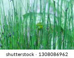bamboo water plants with cool... | Shutterstock . vector #1308086962