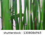 bamboo water plants with cool... | Shutterstock . vector #1308086965