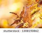 Autumn Leaf Background. Aged...
