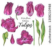 set of vector colored tulip... | Shutterstock .eps vector #1308210988