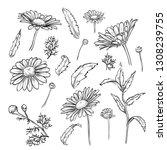 hand drawn elegant chamomile... | Shutterstock . vector #1308239755