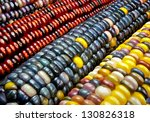 Indian Corn   Variegated Maize...