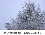 top of the trees in the... | Shutterstock . vector #1308263758