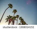 los angeles palm trees  low...   Shutterstock . vector #1308314152