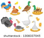 farm birds. poultry chicken ... | Shutterstock .eps vector #1308337045
