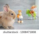 Cute Little Rabbit On Left Side ...