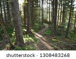sunbeam in forest at viking...   Shutterstock . vector #1308483268