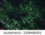 green leaves nature background... | Shutterstock . vector #1308488392